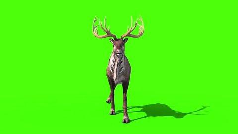 Animal Reindeer Walkcycle Front Green Screen 3D Rendering Animation