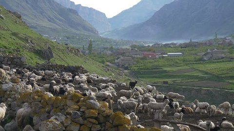 Gorgeous mountain landscape and village in valley, flock of sheep stand in sheepfold on a mountain slope