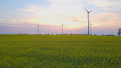 Aerial drone shot of wind turbines at sunset over yellow rape flowers field. Renewable clean energy from wind farm, power generators, sustainable business concept. Drone moving forward.