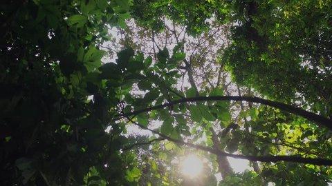 Rainforest, democratic republic congo, Africa