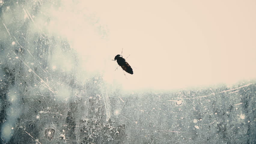 Helpless fly searching for way out from dirty glass captivity, isolated insect #27548020