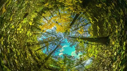 Spherical Panorama of Forest, Video 360 Degree Rabbit Hole Planet 360 Degree, Timelapse. Clear Sky Over Trees, Clouds Are Floating Over the Park, Yellow Leaves Are Fluttering. Woodland in Opole,