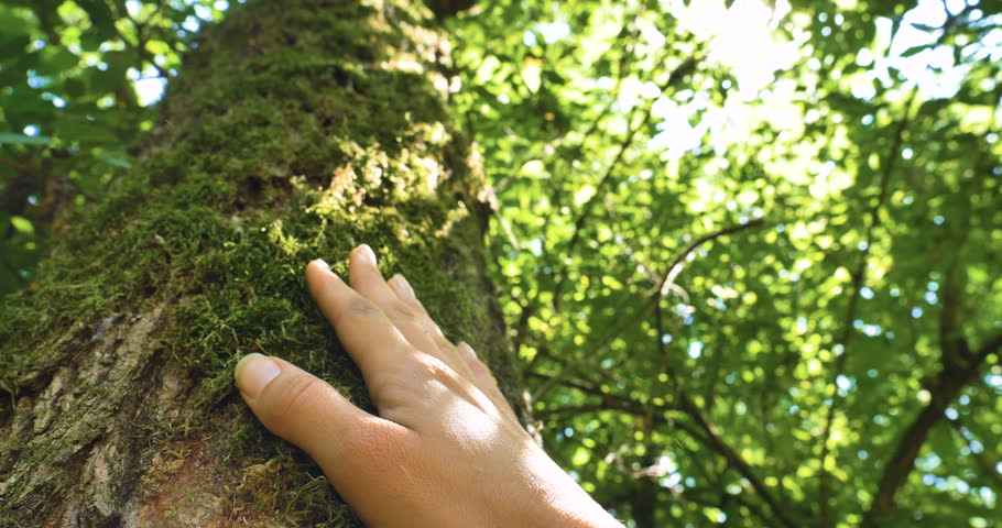 On a sunny day, a tree with bark, a human hand touches a tree, long branches, green leaves. Concept: a perennial plant, trees, save the planet, living plants, the roots of life, energy, chakras.