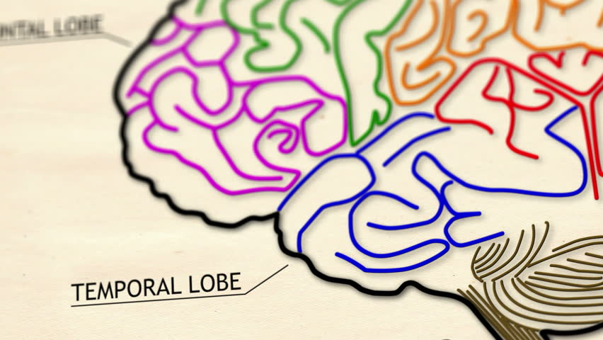 The human brain structure animation illustration Shallow Depth of Field Film Shot Design