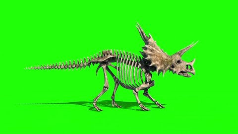 Triceratops Skeleton Walkcycle Side Jurassic World Green Screen 3D Rendering Animation