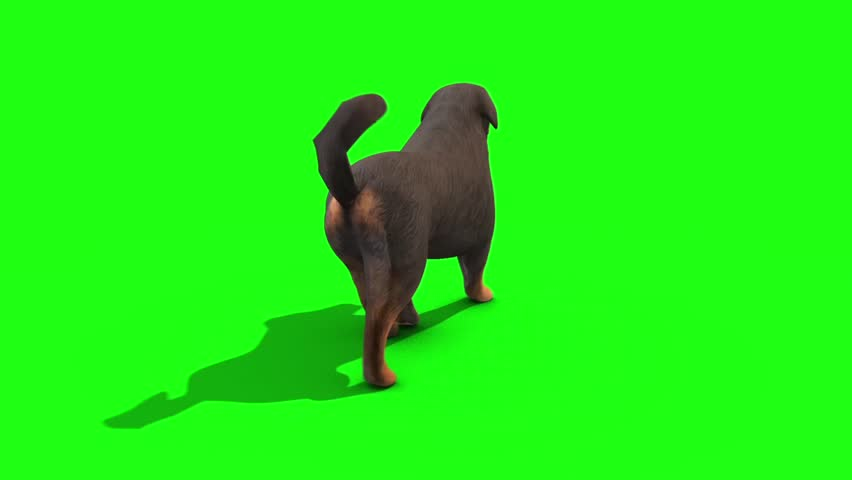 Black Big Dog Walkcycle Back Green Screen 3D Rendering Animation #28324420