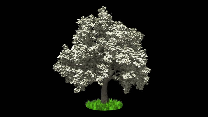 3D Animation. Dollar tree growing, wind blow, against black