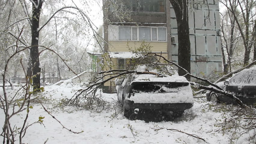 A Lot Of Break Down Branches At The Roof Of The Car And Snowfall
