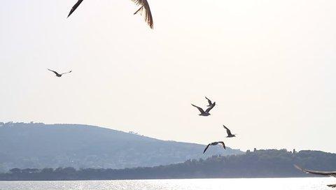 Seagulls flock the ship. Seabirds Heybeli Ada, Islands, Istanbul.