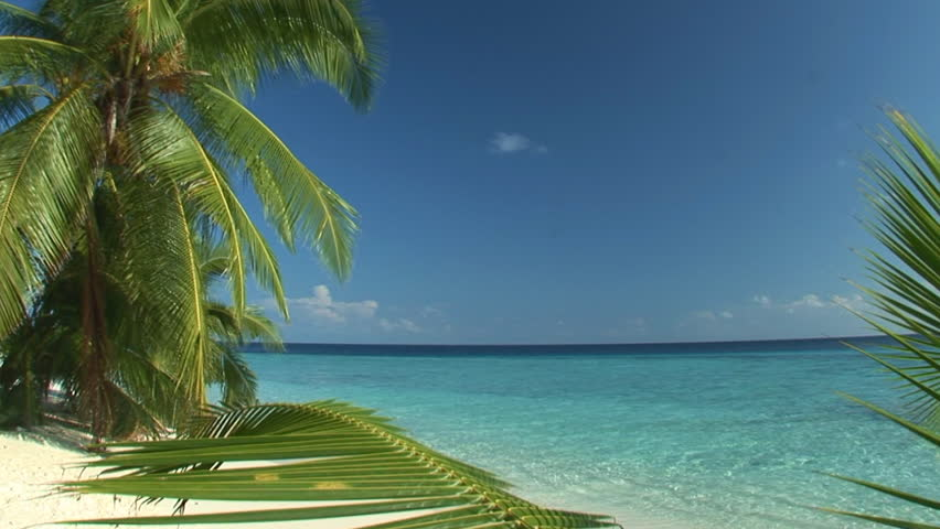 endless loop of tropical palmbeach - ideal for touristic presentation as a background movie