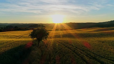 Aerial, edited - Raising above the wheat fields bathing in golden sunset light. Panoramic shot of beautiful farmlands in Tuscany near Pienza