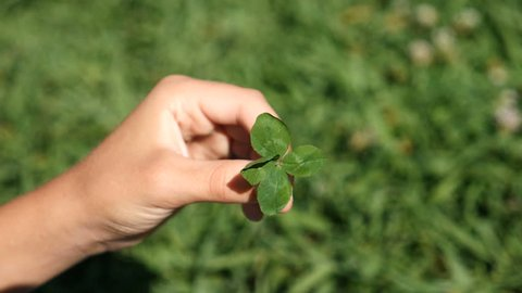 The child's hand holds a four-leafed clover against the background of green grass. close - up. slow-mo