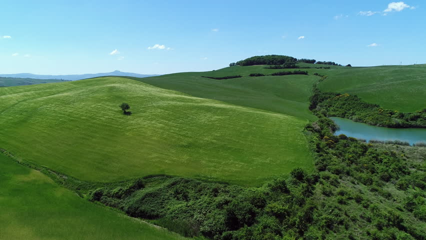 Aerial - Beautiful Tuscany landscape with a lone tree in a green wheat field and a pond