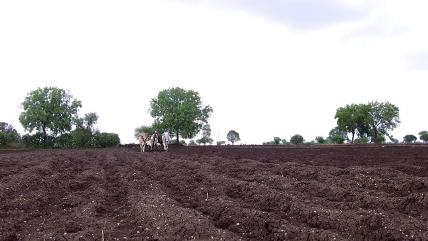 Farmer sowing seeds with traditional way in rural village Salunkwadi, Ambajogai, Beed, Maharashtra, India, Southeast Asia