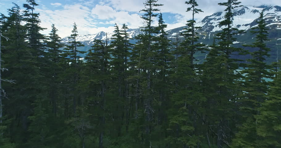 Aerial: flying over and pine trees and sea, Whittier, Alaska