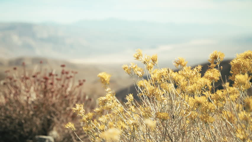 Death Valley Desert Landscape and Flowers