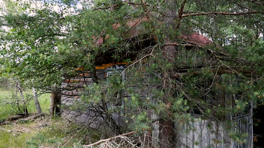 The abandoned wooden house is destroying the trees. Eviction of people. Chernobyl