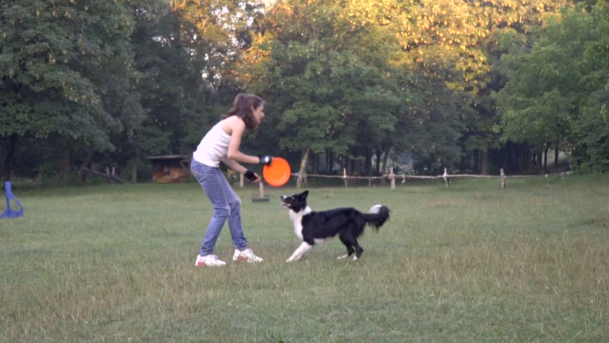 A dog border collie is doing a somersault in the air catching an orange frisbee that the coach trainer standing in the middle of a green lawn threw in the summer