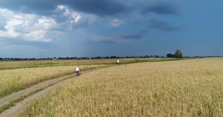 A young man with a child riding bicycles on a country road along the wheat fields. Shooting from a drone. Sports outdoors | Shutterstock HD Video #29629600