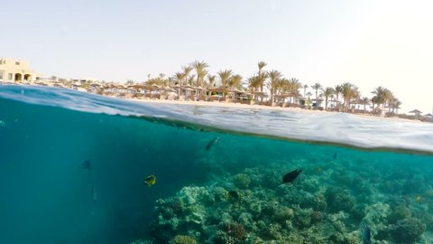 Snorkel swim in underwater surface split view in the tropics paradise with fish and coral reef, above waterline view of paradise beach with parasols. Marsa alam, Egypt. Summer holiday vacation concept