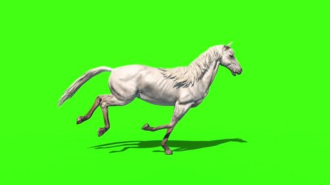 White Horse Runcycle Animals Side Green Screen 3D Rendering Animation