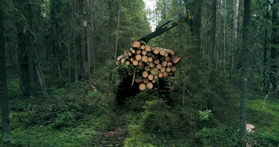 A crawler machine is collecting timber in the woods