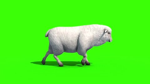 Sheep Walkcycle Side Green Screen 3D Rendering Animation