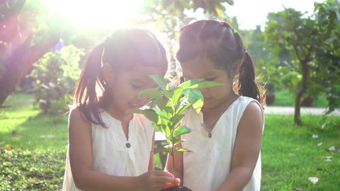 Close up of two Asian children hold a young plant in garden with love. Concept of family love in environmental conservation free day or holidays. Thai ethnicity