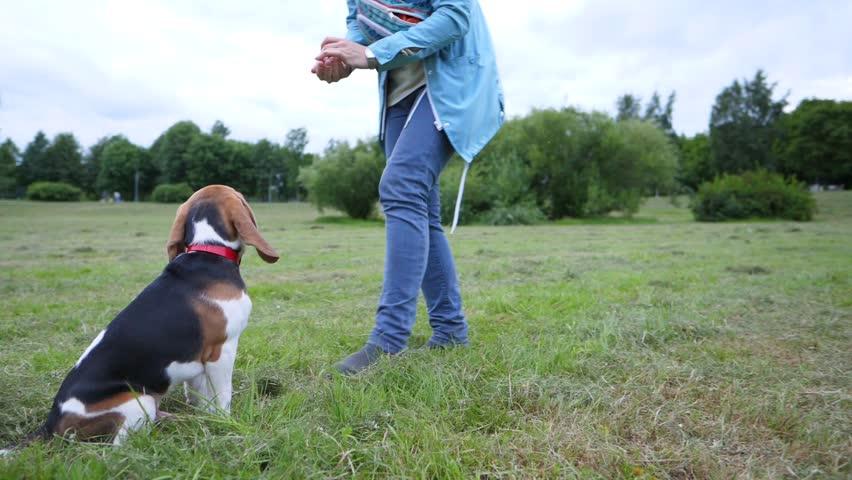 Amazing Small Leg Beagle Adorable Dog - 1  Snapshot_872542  .jpg