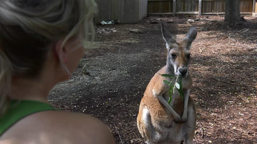 girl feeding kangaroo over shoulder view she turns and smiles