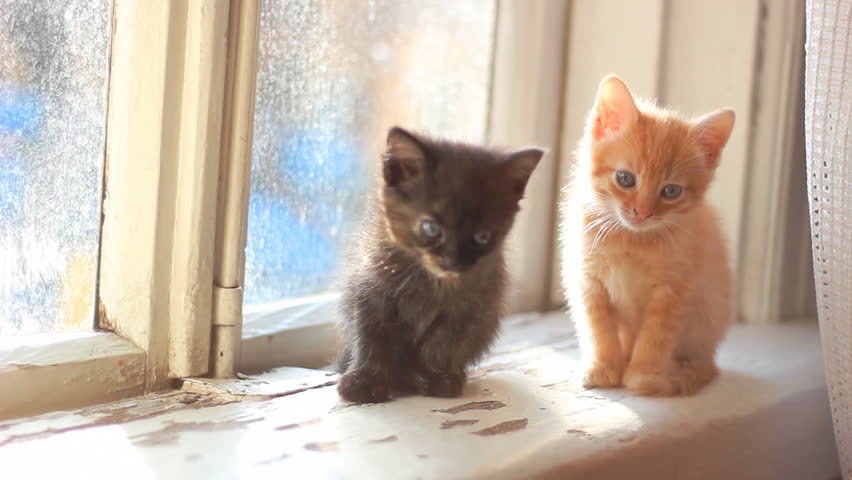 cute kittens sitting on a window sill