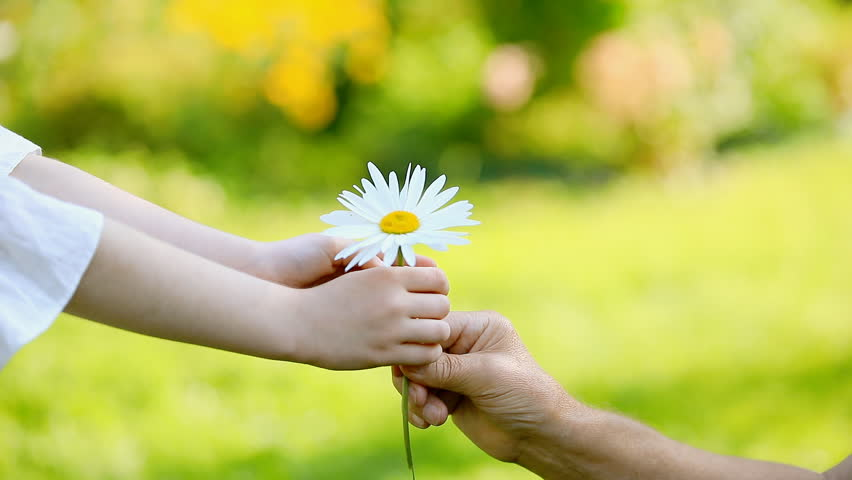Close-up, the child gives the daisy to the grandfather. Slow motion.