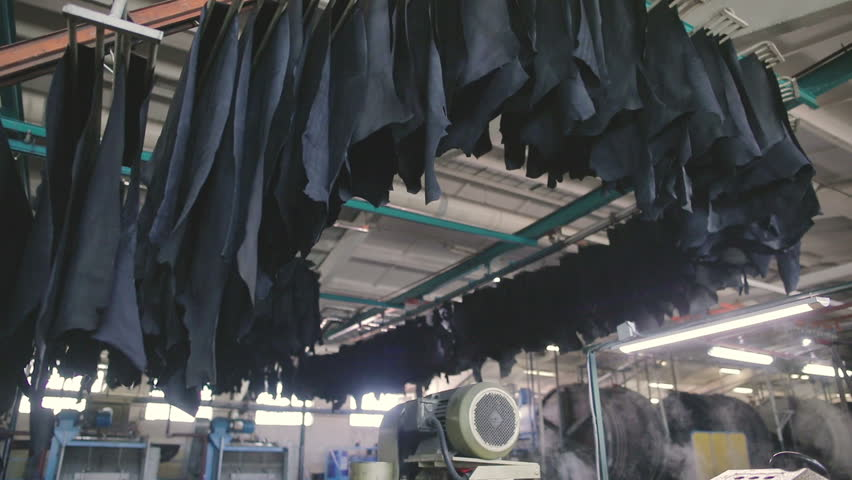 Factory of leather production. Process of drying of a natural leather. in slow motion