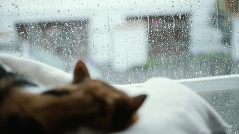 Heavy rain outside and warm atmosphere inside with cute cat sleeping near the window on fall rainy day