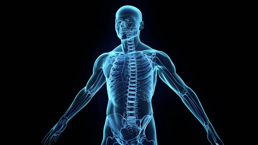 Human internal organs coming into place