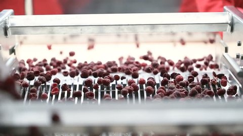 Machine for automatic selection and packing of frozen fruit raspberries and blackberries.