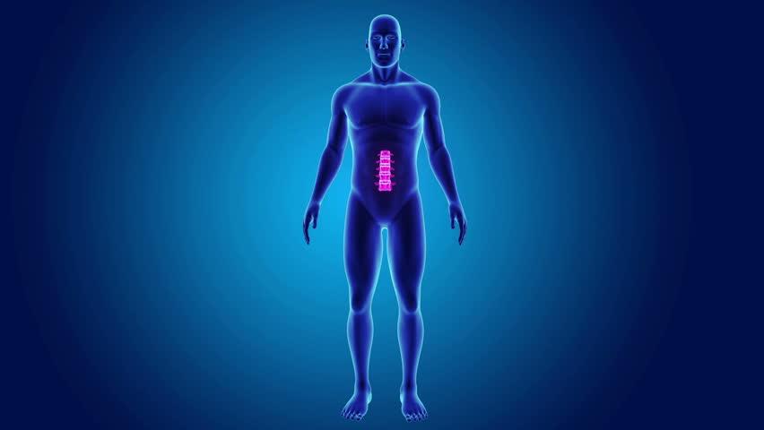 Human Anatomy Walking Scan In 3d X Ray Loop