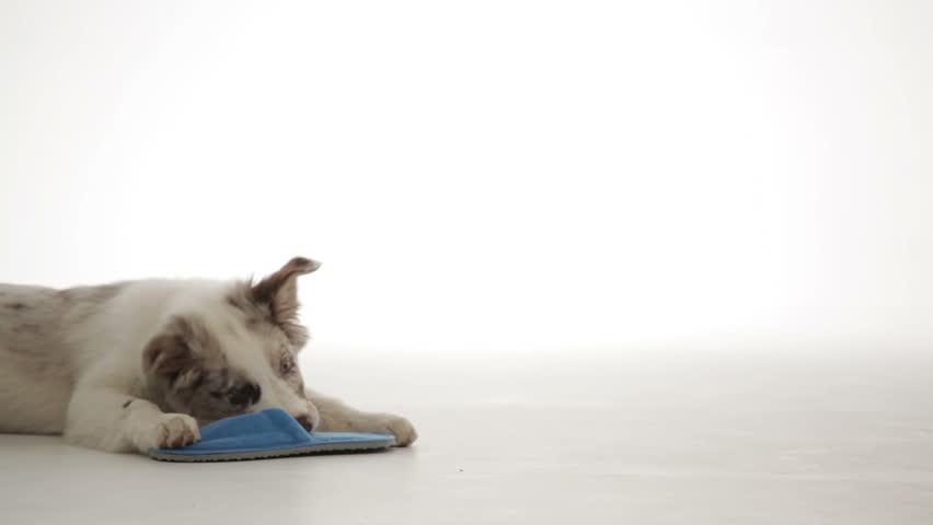 Header of slipper