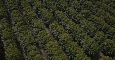 Aerial drone footage of kauai coffee plantation in 4k with kodak lut
