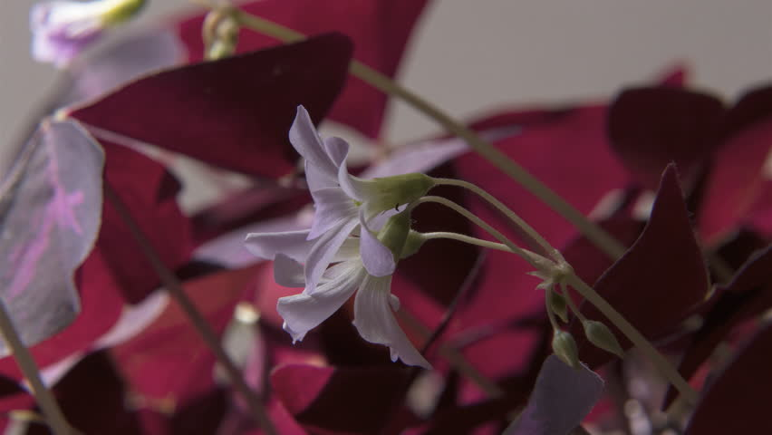 Time Lapse of Plant Leaves & Flowers Blooming  in the Flickering Sun in 4K #30810979