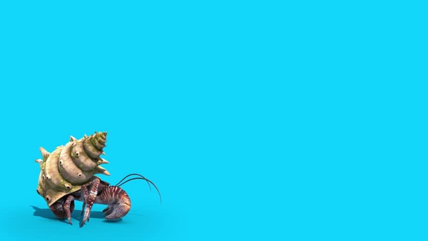 Hermit Crab Paguro Walks Blue Screen 3D Rendering Animation