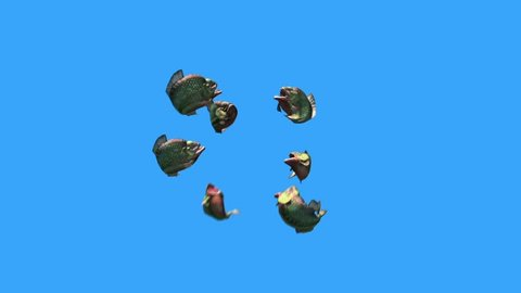 Group Fish Piranha Attack Down Blue Screen 3D Rendering Animation