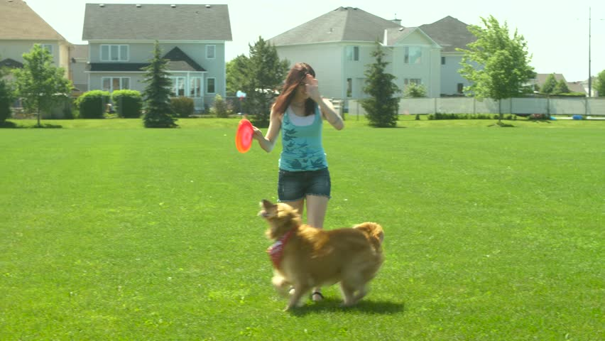 A girl and golden retriever dog in a park and the dog wants the disk.