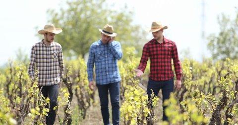 Team of Farmer Men Crossing a Vineyard Field Talk About Viticulture Plantation