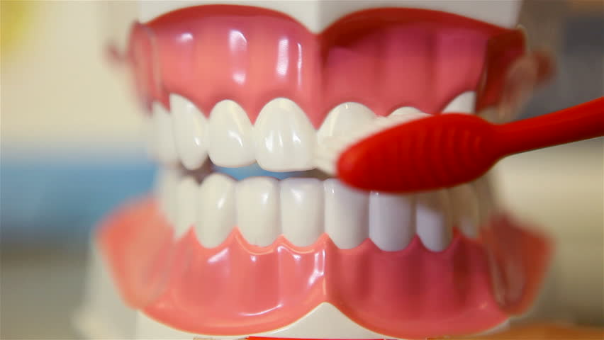 False Teeth Clicking Against The Background Of Models Of The