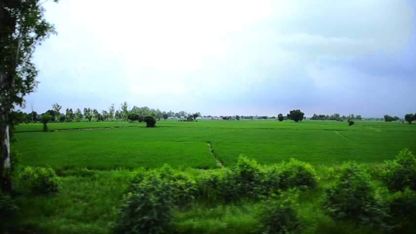Tracking shot of agricultural fields, Amritsar, Punjab, India