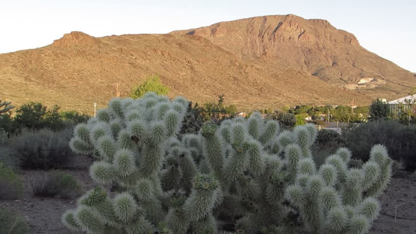 Cholla cactus and a beautiful view of Bull Mountain in Kingman northern Arizona.  Cholla is of the cacti genus Cylindropuntia.