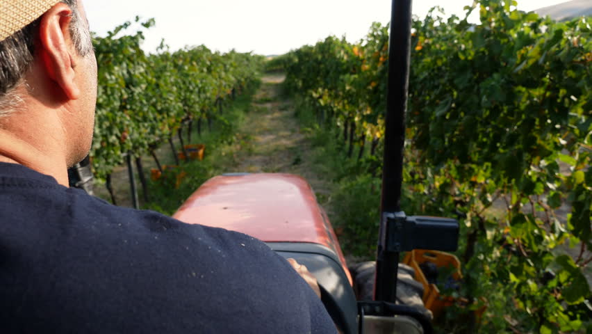 Farmer drives the tractor in the vineyard in South of Italy | Shutterstock HD Video #31374190