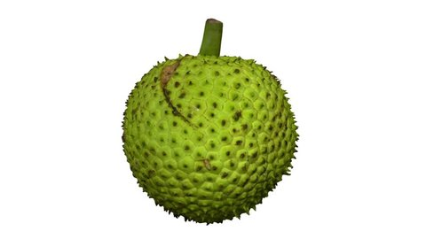 Realistic render of a rotating breadfruit on white background. The video is seamlessly looping, and the object is 3D scanned from a real fruit.