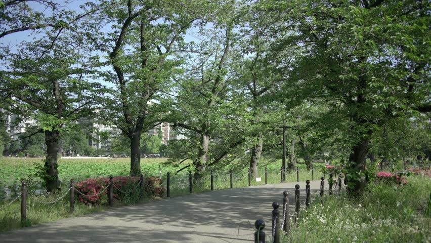 Ueno Park - Shinobazuno Pond